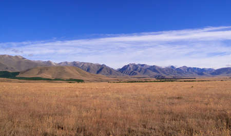 Fields of golden corn form the foreground in front of mountains in New Zealand photo