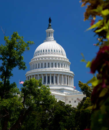 El edificio del Capitolio en Washington DC, enmarcado por árbol con flores en primer plano