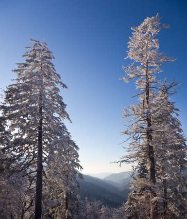 Famous Smoky Mountain view of pine or fir trees covered in snow in early spring and looking down valley photo