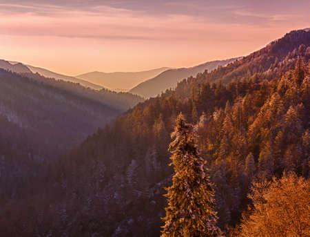 smokies: Configuraci�n de Sun en el valle en Smokies como la nieve cubre las ramas de los �rboles