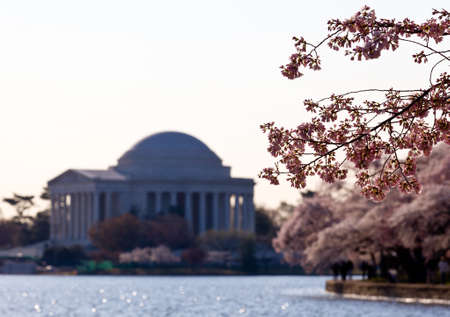 Jefferson Memorial at dawn by Tidal Basin and surrounded by pink Japanese Cherry blossoms Stock Photo - 9182086