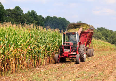Field of corn being harvested in the late summer Stock Photo - 10408082