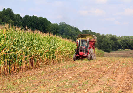 Field of corn being harvested in the late summer photo