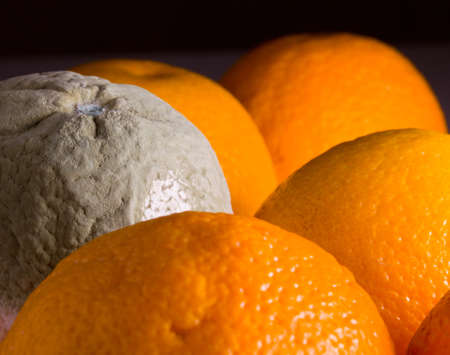 perishable: Green mouldy powder on the side of an orange among other oranges Stock Photo