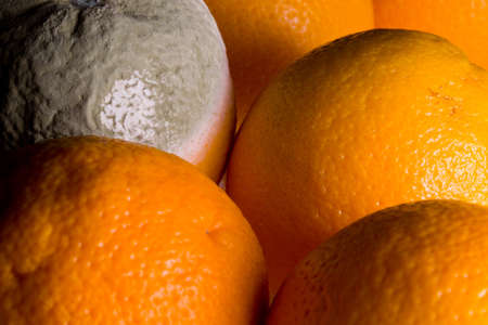 mildewed: Green mouldy powder on the side of an orange among other oranges Stock Photo