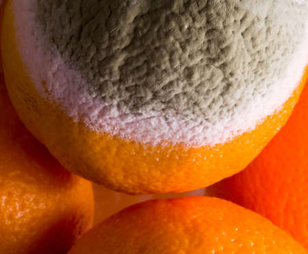 mouldy: Green mouldy powder on the side of an orange among other oranges Stock Photo