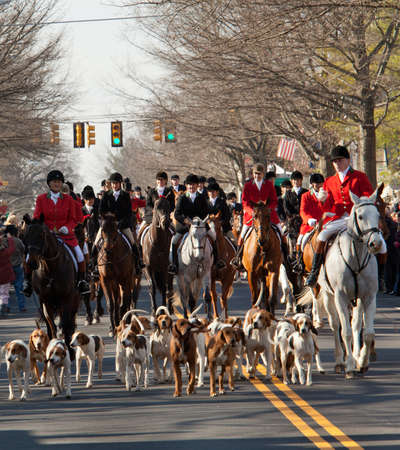 foxhunt: MIDDLEBURG, VA - DECEMBER 3: The Middleburg Hunt in traditional December parade down main street of Middleburg, Virginia on December 3, 2011 Editorial
