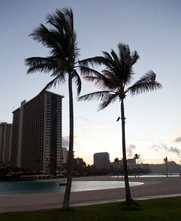 Palm trees by side of beach in Waikiki at dawn Stock Photo - 12451375