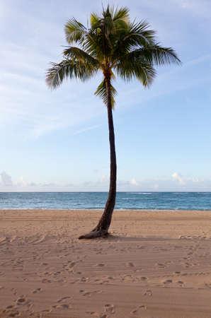Palm tree on beach in Waikiki in Hawaii Stock Photo - 12451388