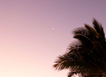 frond: Sunrise with palm tree and crescent moon in sky Stock Photo