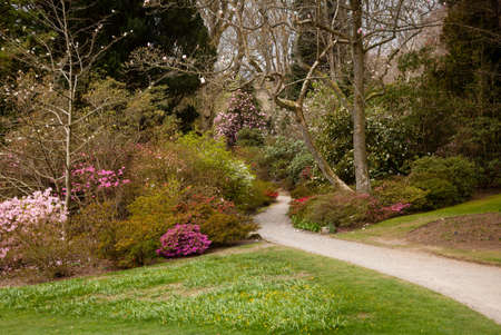 flower garden path: Pathway leading into shrubbery of azaleas and flowering bushes