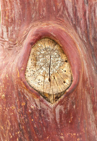 bark peeling from tree: Close up shot of peeling bark on tree trunk with remains of branch