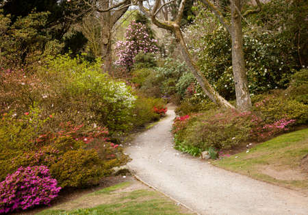 Pathway leading into shrubbery of azaleas and flowering bushes