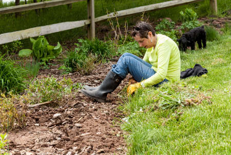 working woman: Woman gardener sits on grass when weeding flowerbed Stock Photo