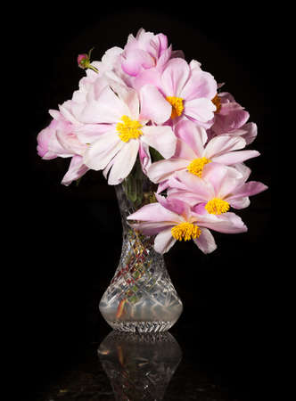 Arrangement of Peony blossoms in a cut glass vase reflecting off table and isolated against black photo