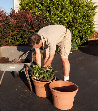 dug: Senior male turning over dirt in wheelbarrow Stock Photo