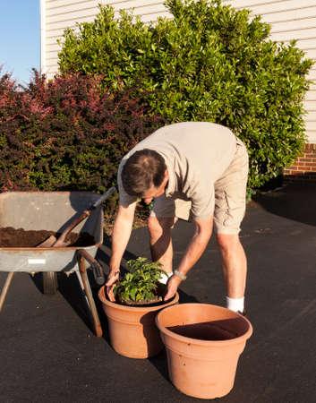 Senior male turning over dirt in wheelbarrow Stock Photo - 13608316