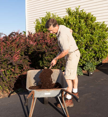 Senior male turning over dirt in wheelbarrow Stock Photo - 13608321