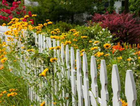 Yellow and red flowers growing along a white picket fence in traditional garden Stock Photo - 13865383