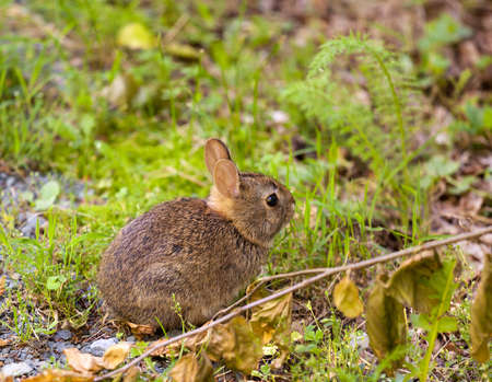 Cute small baby rabbit on forest floor in grassy area