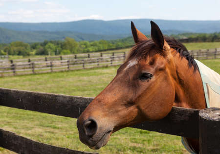 Head of an old brown horse in meadow leaning on a wooden fence with hills in background photo