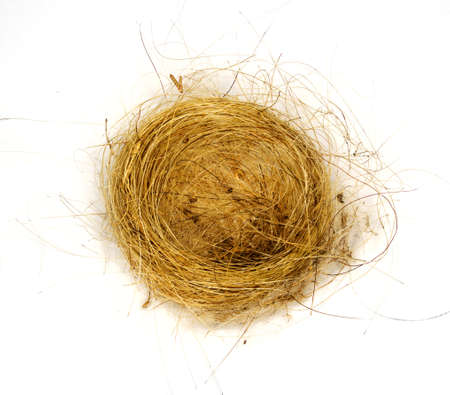 Birds nest made from woven grass hair and feathers isolated against white Stock Photo