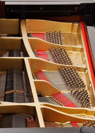 Detailed interior of grand piano showing the strings, pegs, sound board with focus sharp across image photo