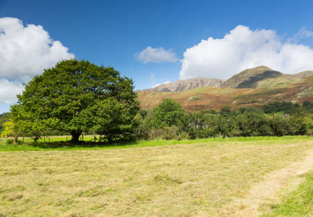 Newly mown hay or grass in field by Buttermere in English Lake District Stock Photo - 15363329