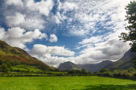 Sheep grazing in meadow under Fleetwith Pike by Buttermere in English Lake District Stock Photo