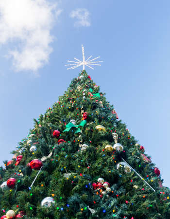 large tall christmas tree in exterior park in key biscayne florida decorated for xmas photo - Tall Christmas Tree