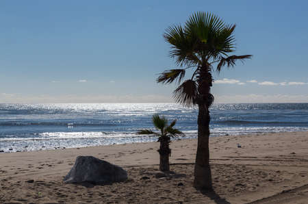 three palm trees: Large and small palm trees on beach in Malibu with rock and ocean in background Stock Photo
