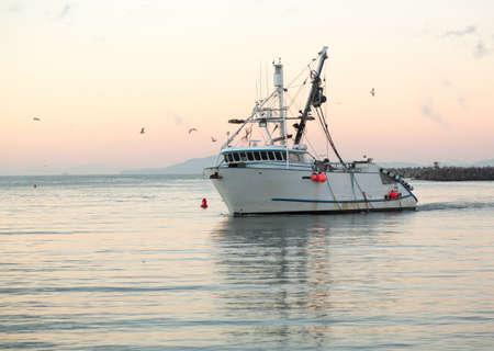 trawler: Fishing boat trawler entering harbor at Ventura at dawn with lights and birds following