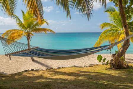 Hammock swinging between palm trees on caribbean beach by blue ocean