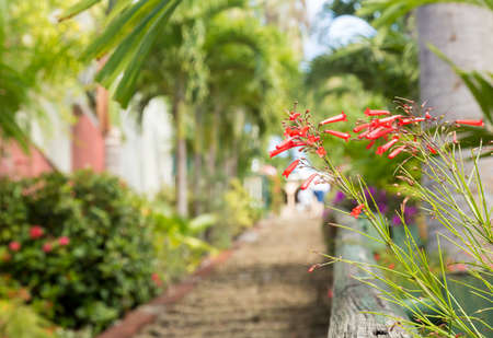 ninety: Ninety nine steps framed by red flower blossom in Charlotte Amalie St Thomas