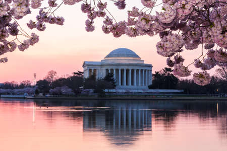 monument: Jefferson Memorial at dawn by Tidal Basin and surrounded by pink Japanese Cherry blossoms with the monument lit by the rising sun at dawn