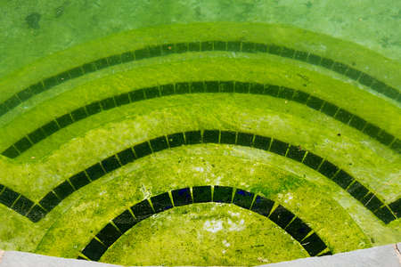 algae: Back yard swimming pool behind modern single family home at pool opening with green stagnant algae filled water before cleaning