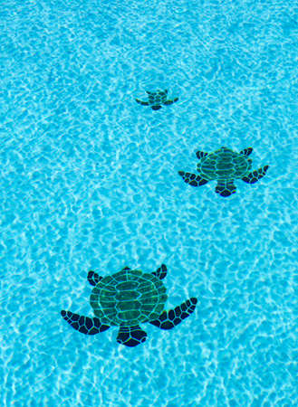 apparently: Three tiled turtles on the floor of a swimming pool apparently moving towards the camera with ripples on surface of water