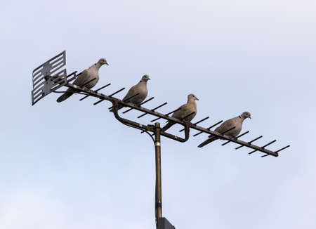Four doves or pigeons perched on British TV aerial on mast on cloudy day photo