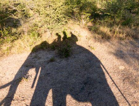 zambian: Shadow of tourists on Elephant safari to see Victoria Falls on Zambian side of the waterfall