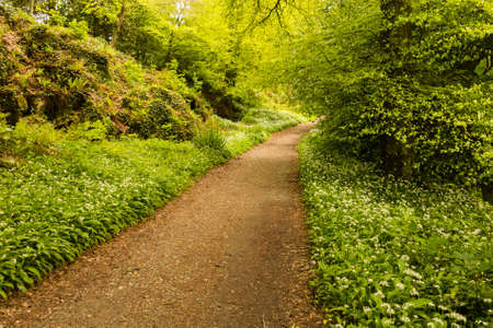 Walking path leading off into distance in bright flower strewn woods or forest in bright green photo