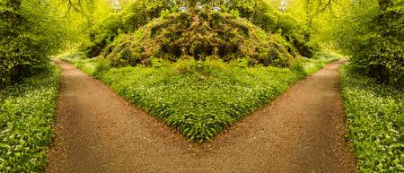 選択またはハードの決定を説明するために森の小道にフォークの概念的な写真。交差する方向を選択します