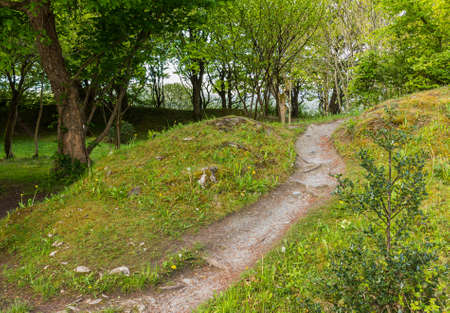 off path: Walking path leading off into distance in bright flower strewn woods or forest in bright green