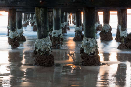 barnacles: Sun rise illuminates structure of pier at Coffs Harbour in New South Wales Australia