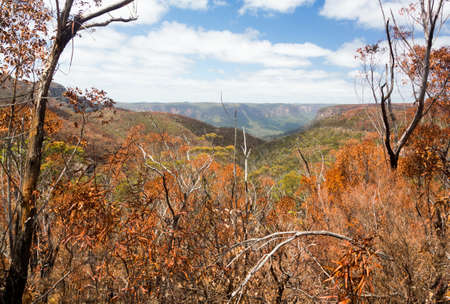 bush fire: Remnants of forest or bush fire in Blue Mountains of New South Wales in Australia