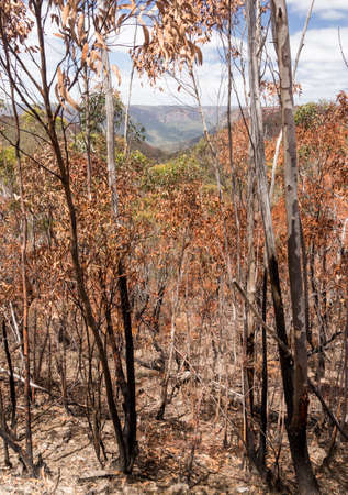 Remnants of forest or bush fire in Blue Mountains of New South Wales in Australia