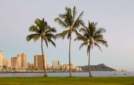 three palm trees: Panorama of the skyline of Honolulu and Waikiki from Ala Moana park as the sun sets with three palm trees framing the scene