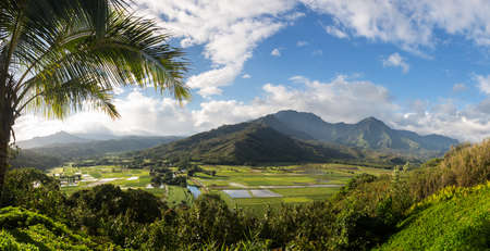 Panoramic view of the taro fields in the Hanalei valley from Princeville overlook in Kauai in Hawaiian islands in high resolution photo