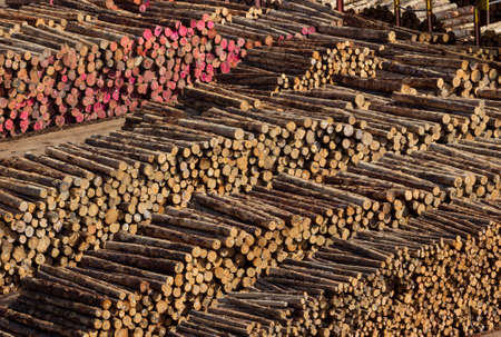 forestry industry: Piles of cut tree logs and trunks on wharf of Wellington Harbour in New Zealand ready for export
