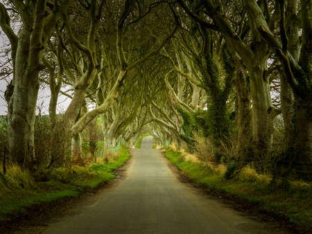 ブナの古木の枝、トラックのオーバー ハングの下に渡す Bregagh 道路と暗いヘッジとして知られている北アイルランドの魔法の風景 写真素材