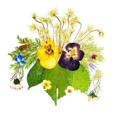 fiori secchi: Bella disposizione artistica del pressati fiori secchi isolati su uno sfondo bianco